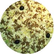 Pizza Ravioles Burger de la pizzeria La Tour de Pizz