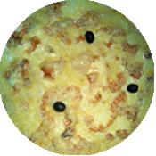 Pizza Saumon de la Tour de Pizz à Bourg les Valence